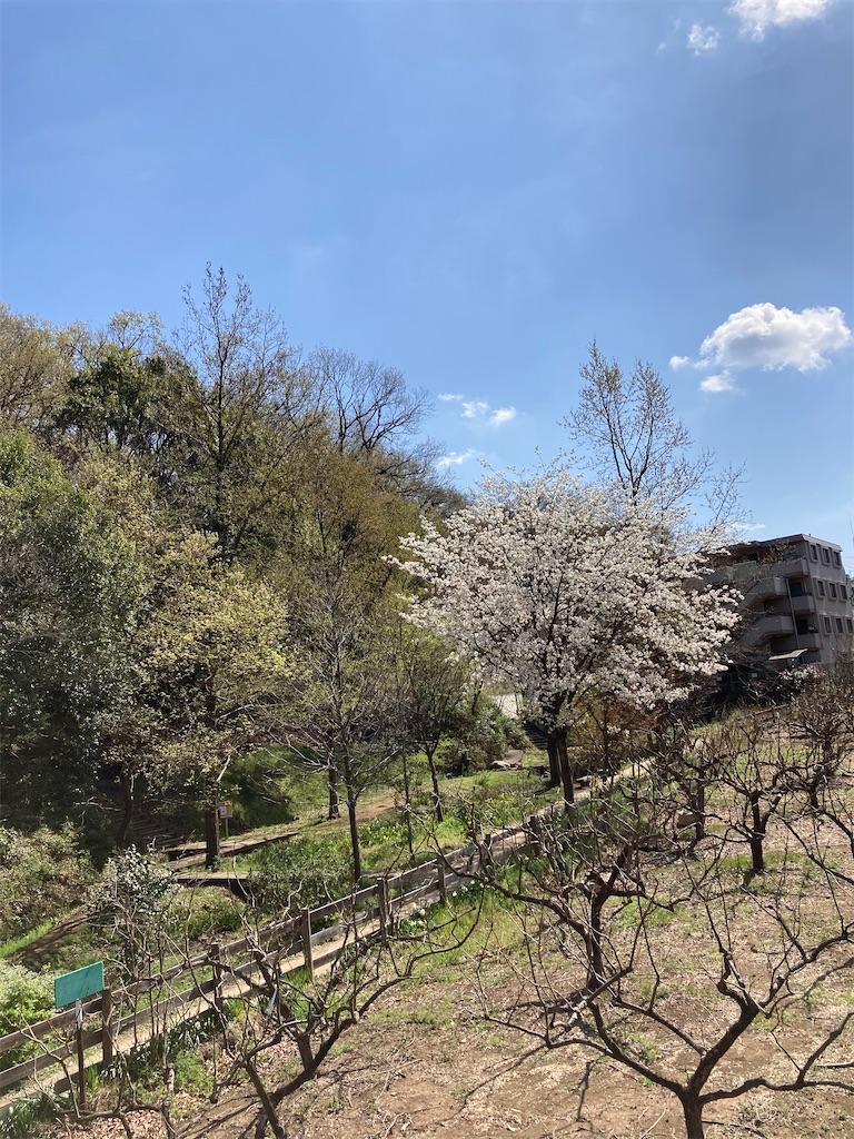 f:id:masaru-arameya:20210324130342j:image