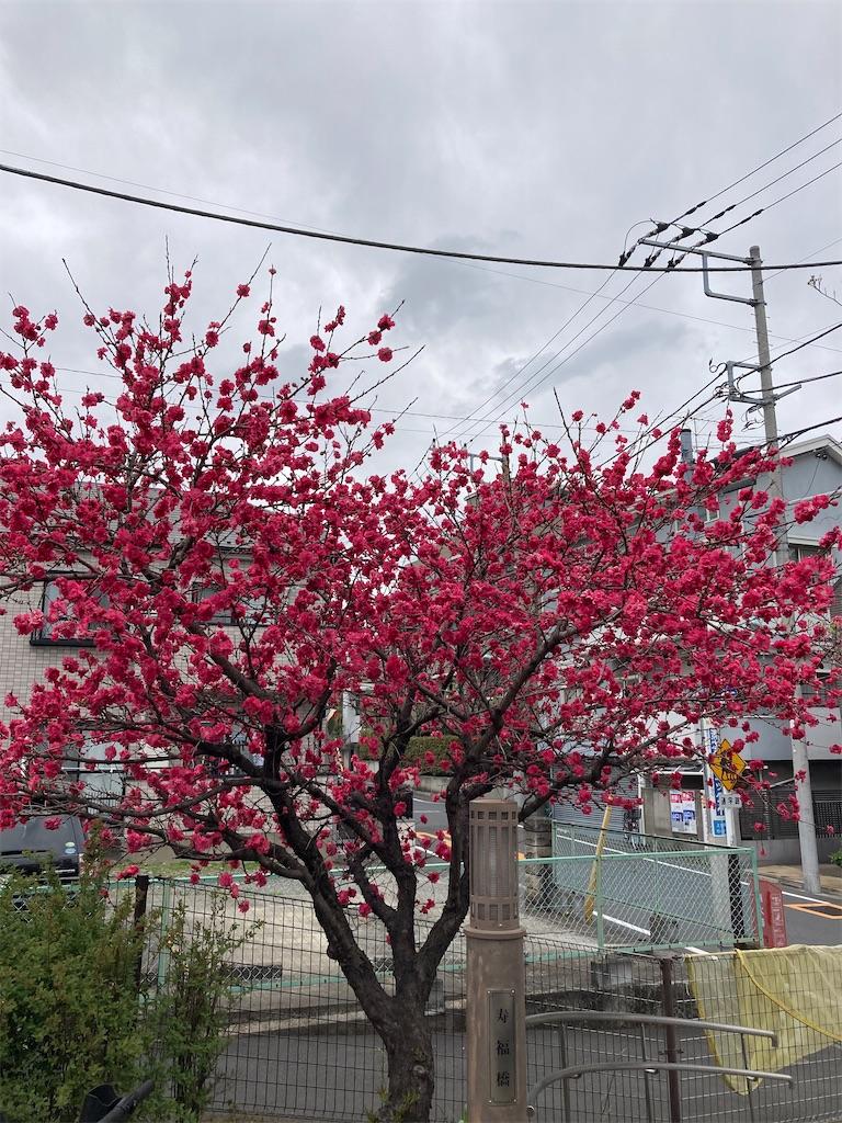 f:id:masaru-arameya:20210326072213j:image