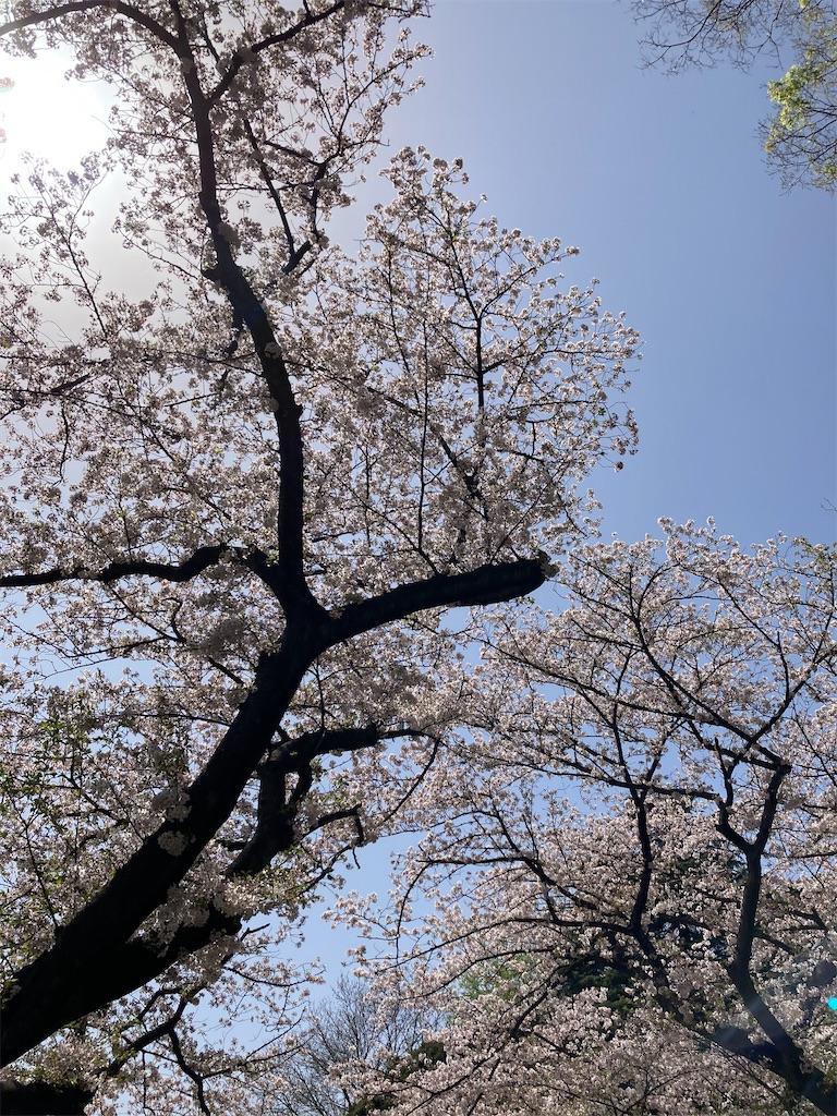 f:id:masaru-arameya:20210331130958j:image