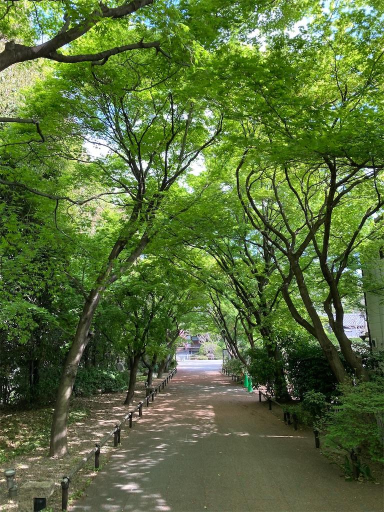 f:id:masaru-arameya:20210405085338j:image