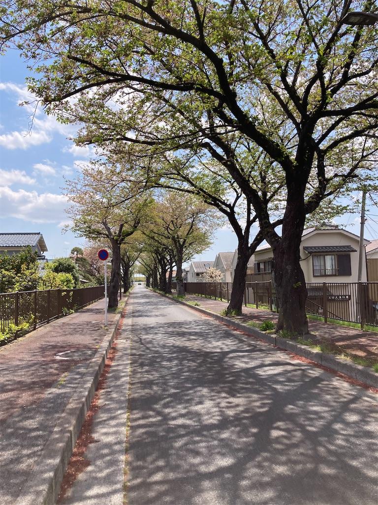 f:id:masaru-arameya:20210411152606j:image