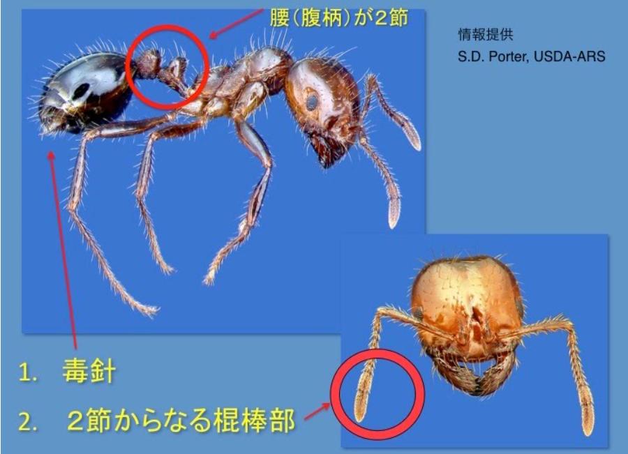 f:id:masaru-masaru-3889:20170715081317p:plain