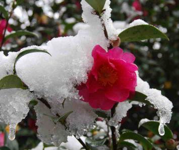 f:id:masarutti2:20110116192837j:image