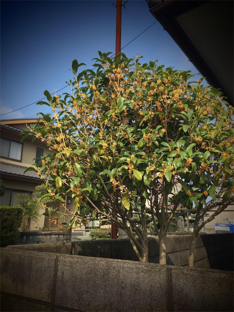 f:id:masataka173:20161020050042j:image