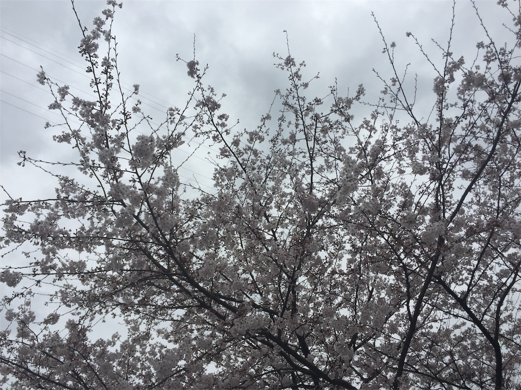 f:id:masataka173:20170406164744j:image