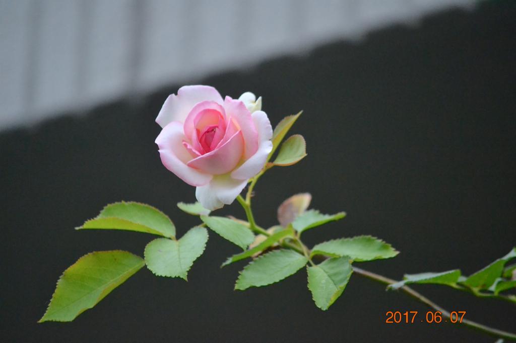 f:id:masatdm1951:20170607171906j:plain