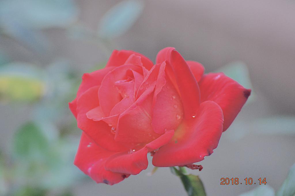 f:id:masatdm1951:20181014183459j:plain