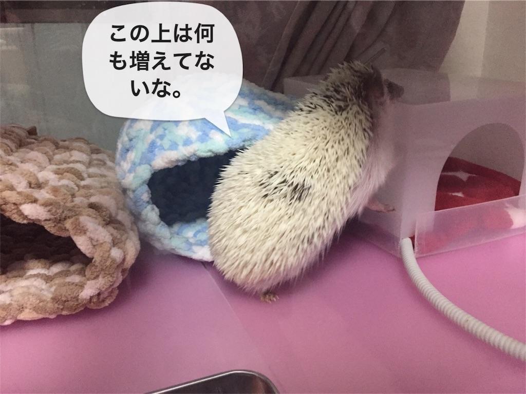 f:id:masato-au-smartphone:20161125215107j:image