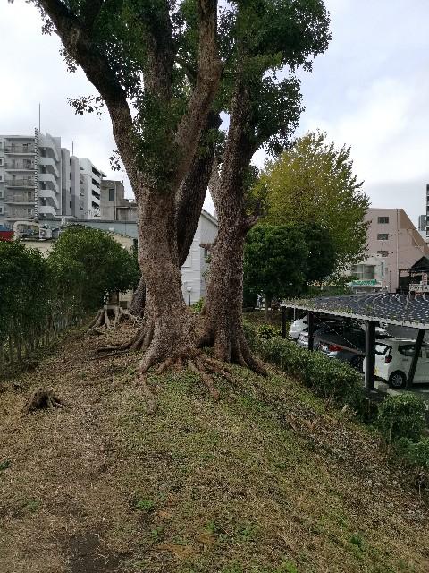 f:id:masato19641105:20191124180802j:image