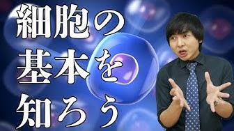 f:id:masato19641105:20200404201304j:plain