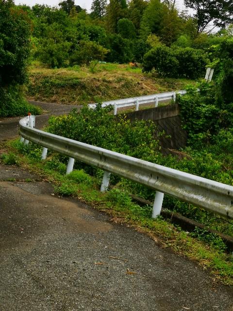 小田原市沼代の蜜柑畑2