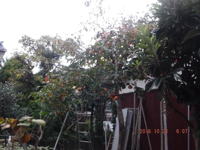 f:id:masaya50:20161025053444j:image:w300