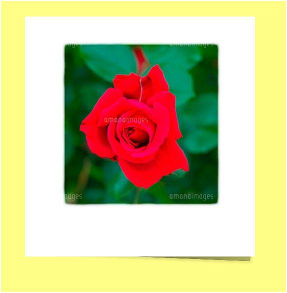 f:id:masayan-web:20120519025138j:image:w300