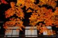 京都新聞写真コンテスト 秋、流れ落つ