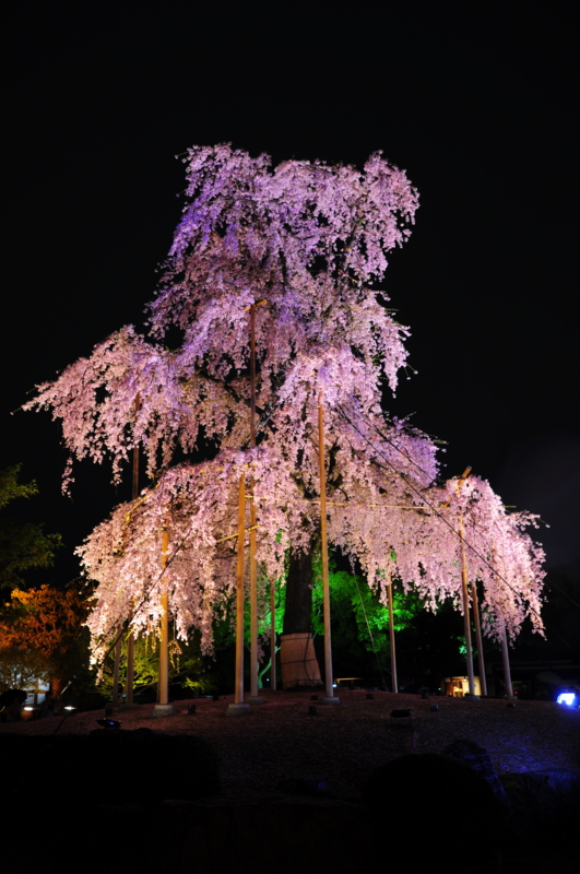 京都新聞写真コンテスト 七色ライトアップ