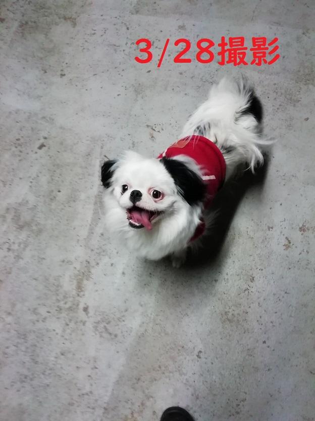 f:id:mashirokurosou:20190329014734j:plain