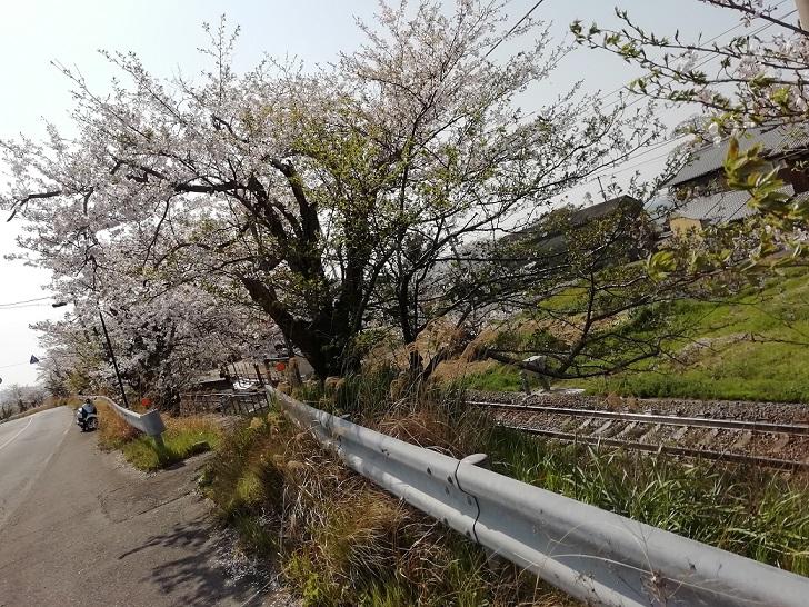 f:id:mashirokurosou:20190409110831j:plain