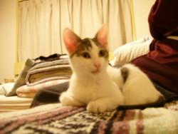 f:id:masubon:20090703215113j:image