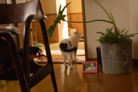 f:id:masubon:20111014142024j:image