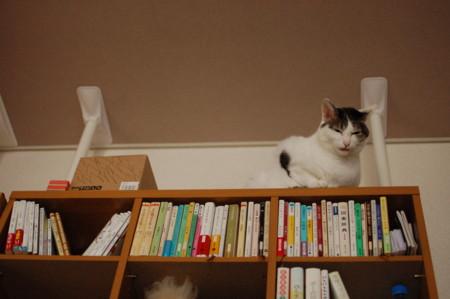 f:id:masubon:20111121110130j:image