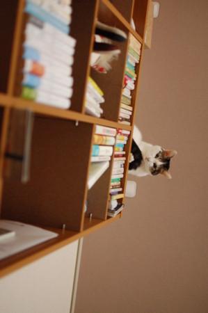 f:id:masubon:20111121110530j:image