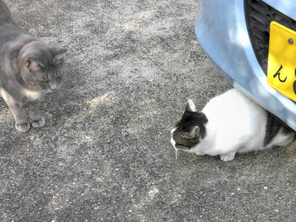 野良猫 訪問