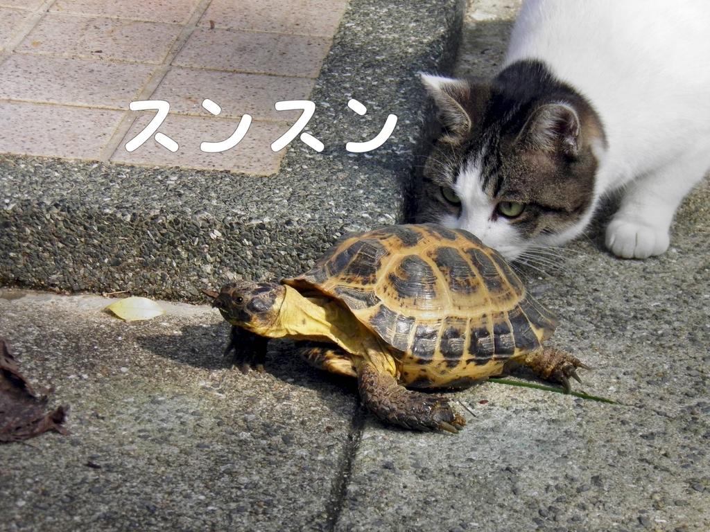 f:id:masuhiro6595:20181122152205j:plain