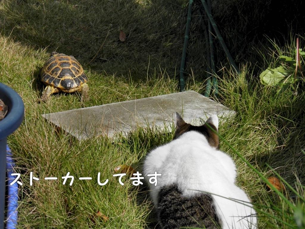 f:id:masuhiro6595:20181122153056j:plain