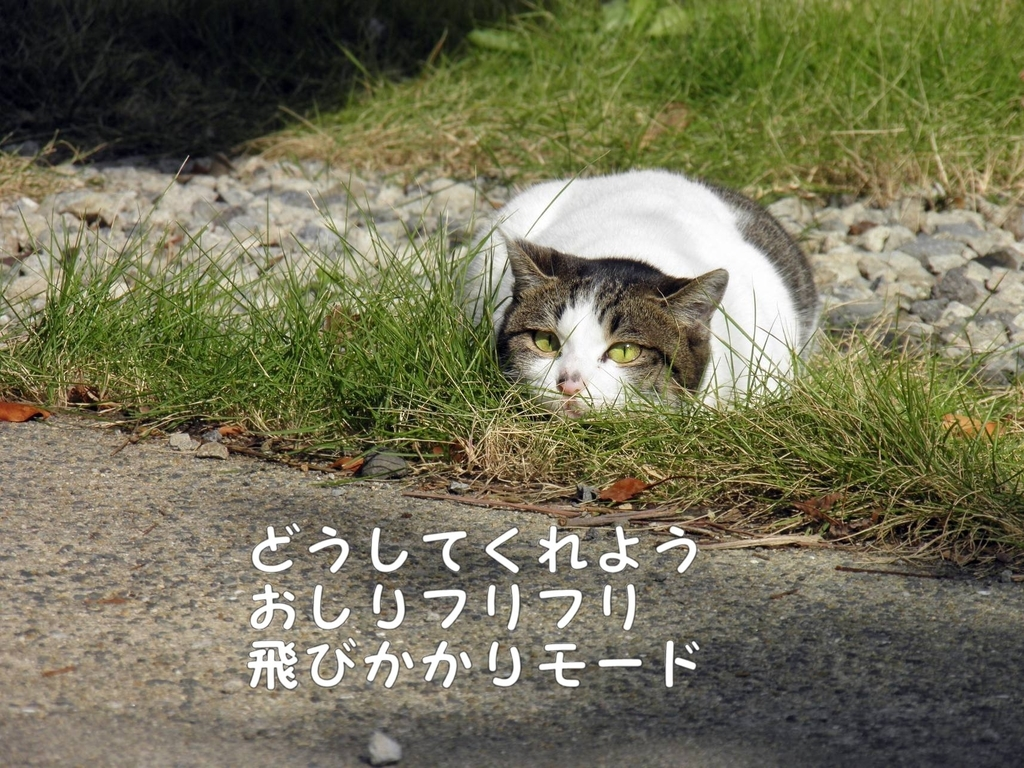 f:id:masuhiro6595:20181122155416j:plain