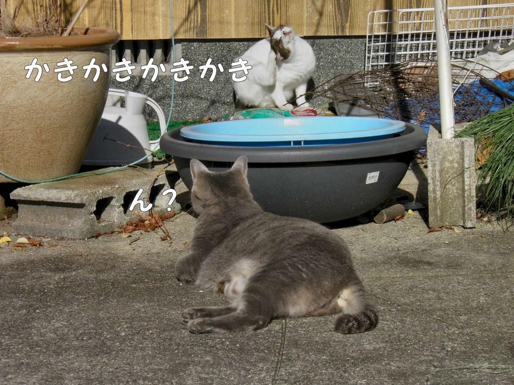 f:id:masuhiro6595:20181225164517j:plain