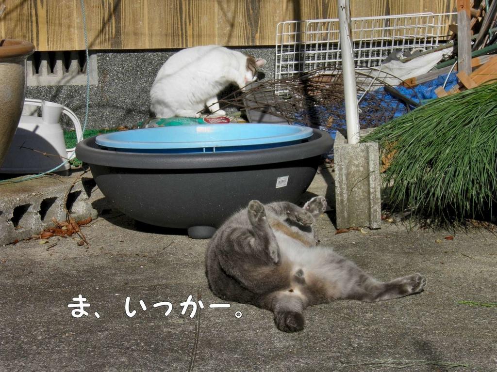 f:id:masuhiro6595:20181225164648j:plain
