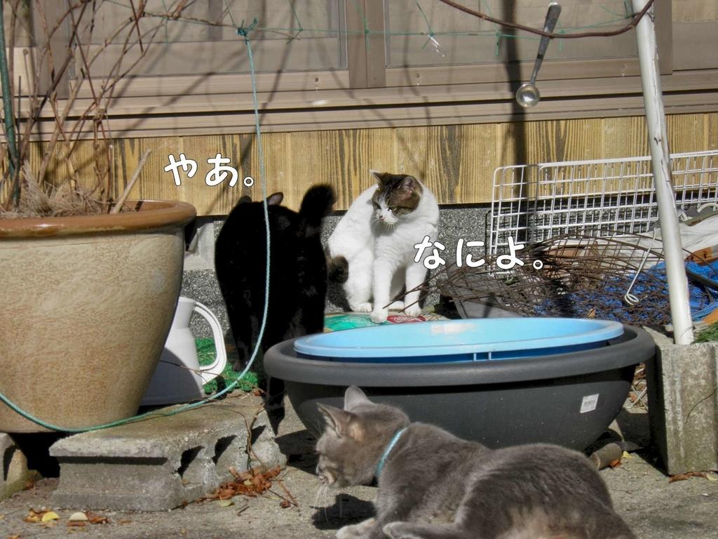f:id:masuhiro6595:20181225164746j:plain