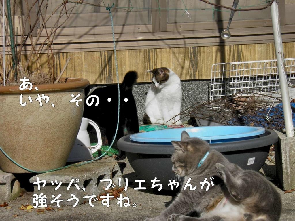 f:id:masuhiro6595:20181225164903j:plain