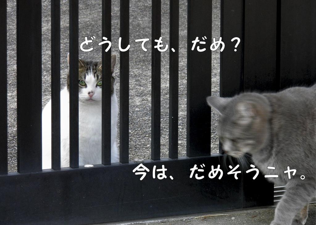 f:id:masuhiro6595:20190129171524j:plain