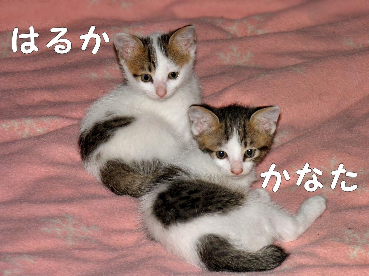 f:id:masuhiro6595:20190517195924j:plain