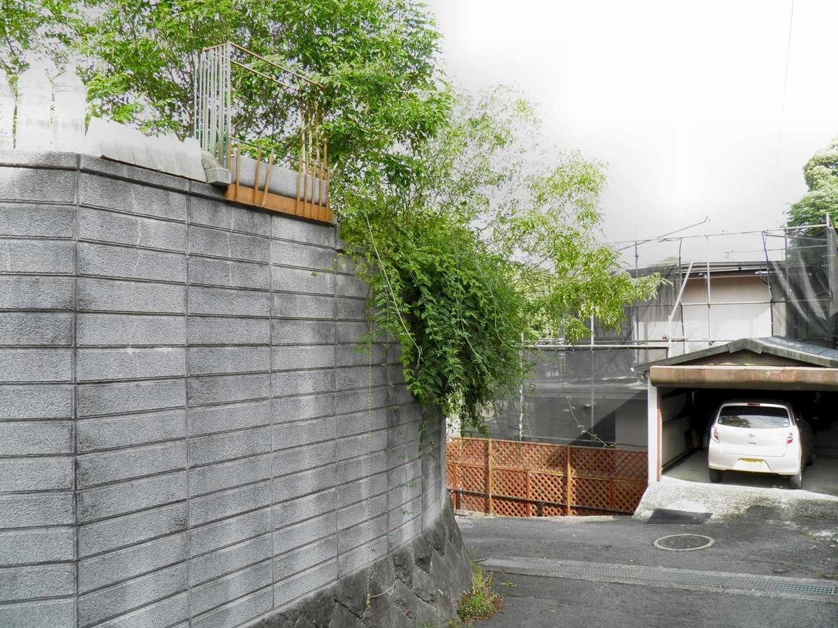 高いブロック塀を乗り越えて道路にはみ出すジャスミンの枝