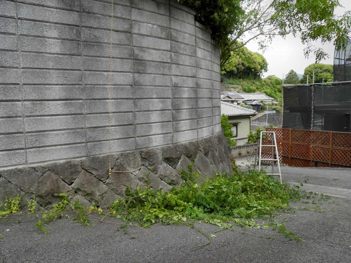 2mの塀を乗り越えて隣まで栄たジャスミンの剪定