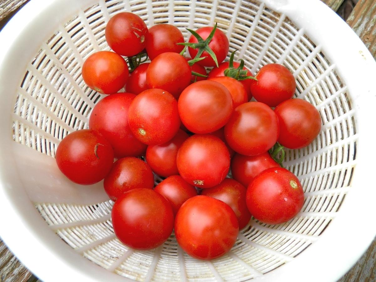 ミニトマトの実の写真