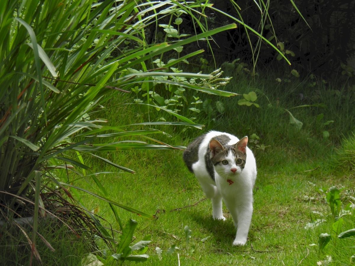 子猫はるか庭探検の写真