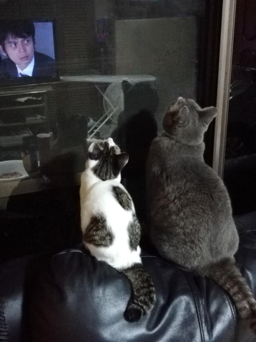 シンクロする猫の写真