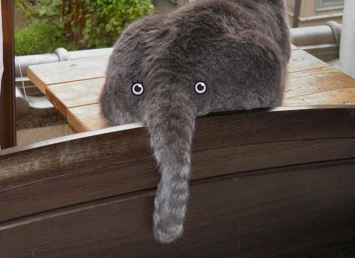 アンジェロのシッポを象の鼻にした写真