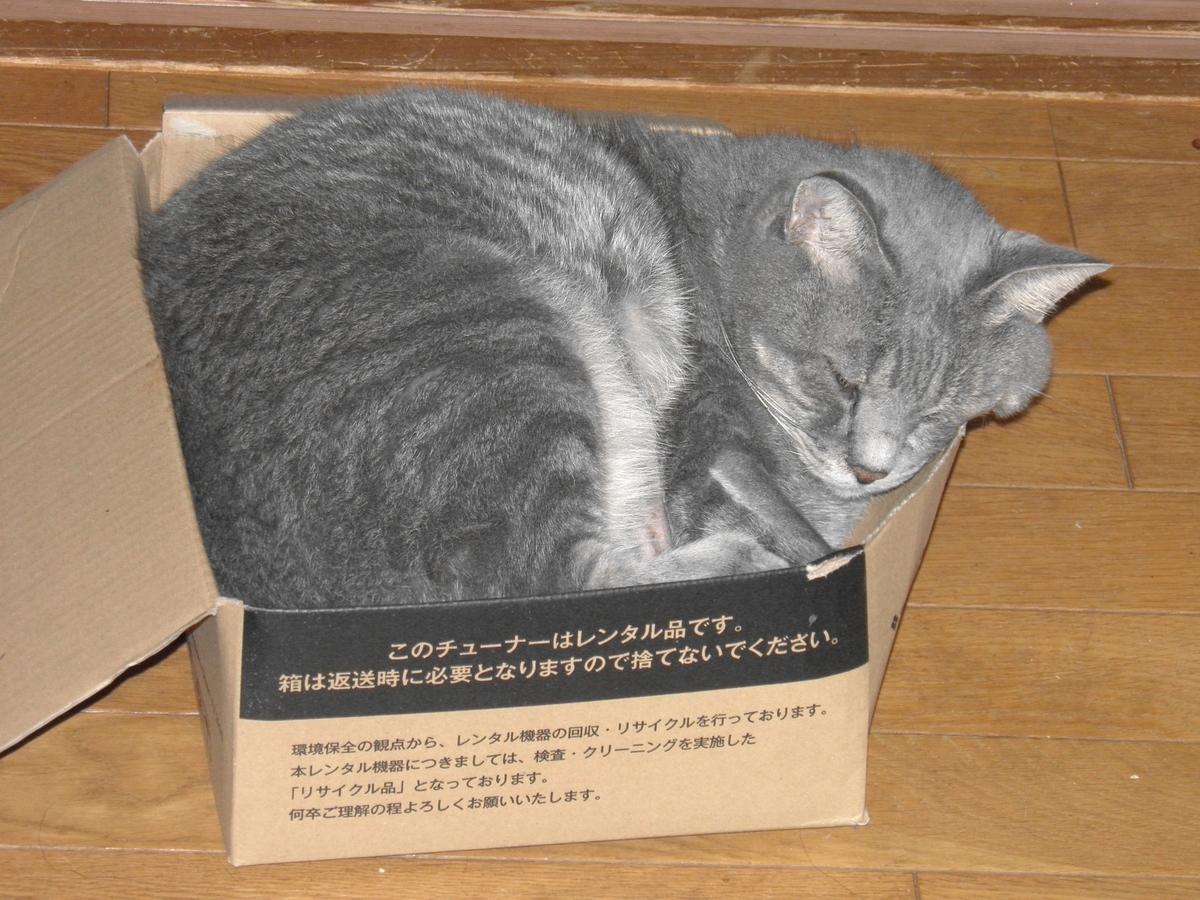 箱に入ったアンジェロの写真
