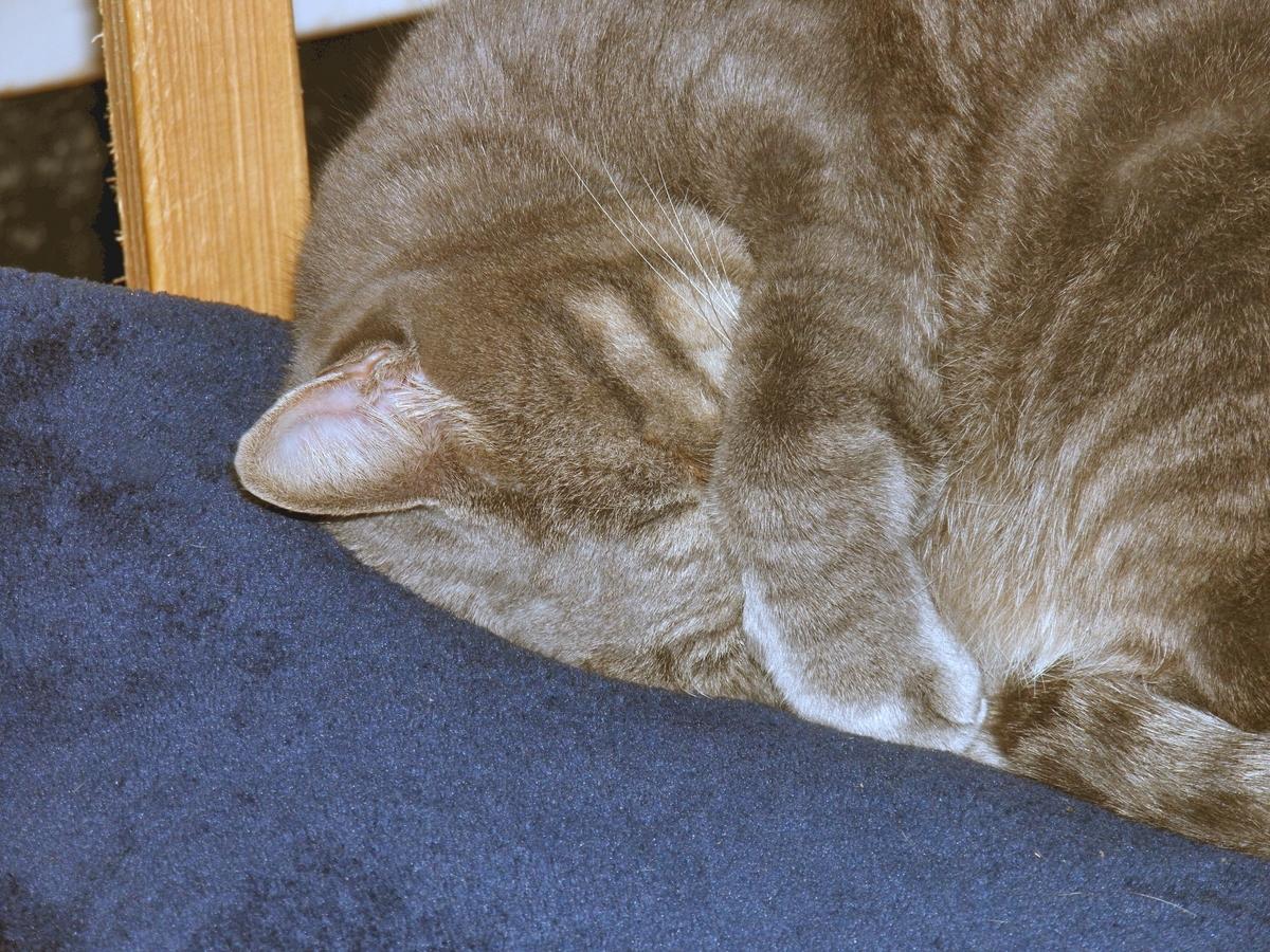ねむねむアンジェロの写真 眠り猫