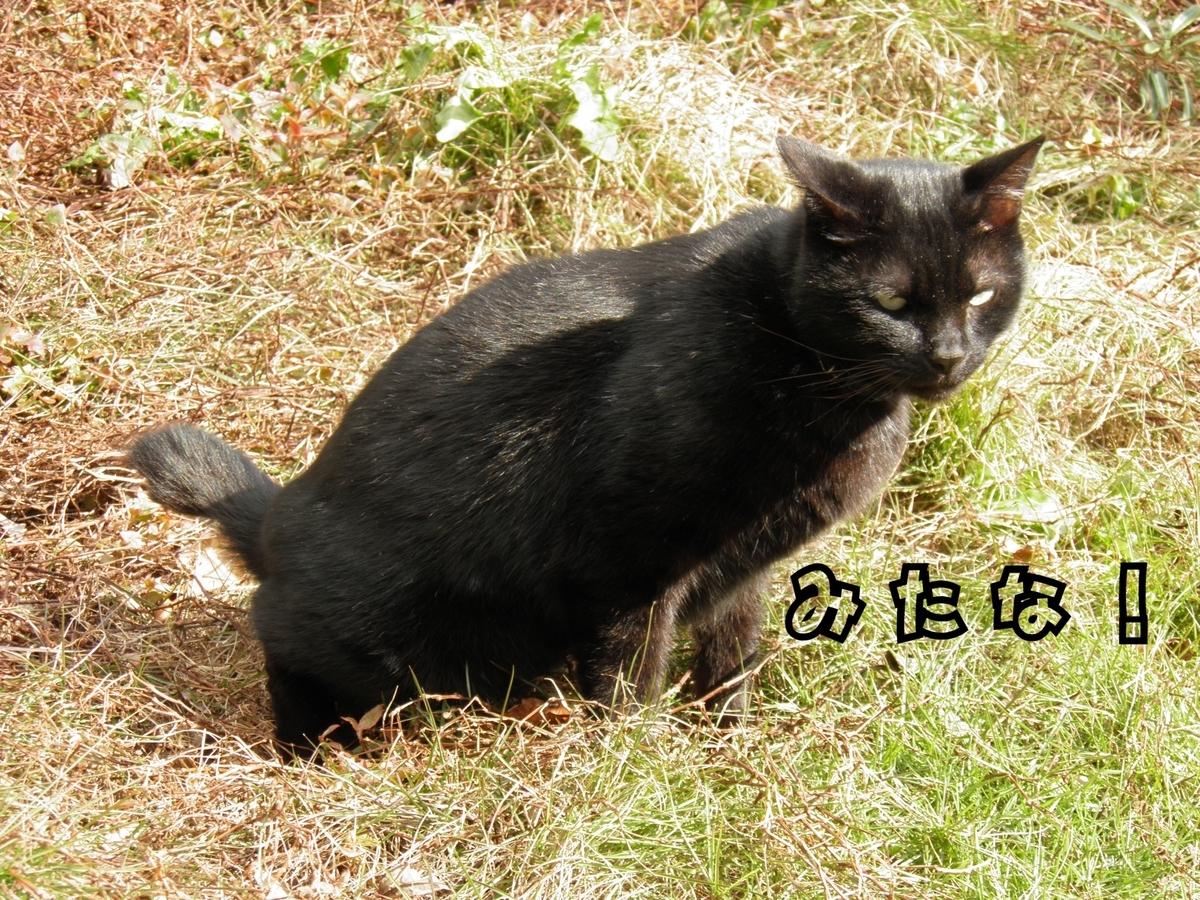 オシッコする黒猫祐希