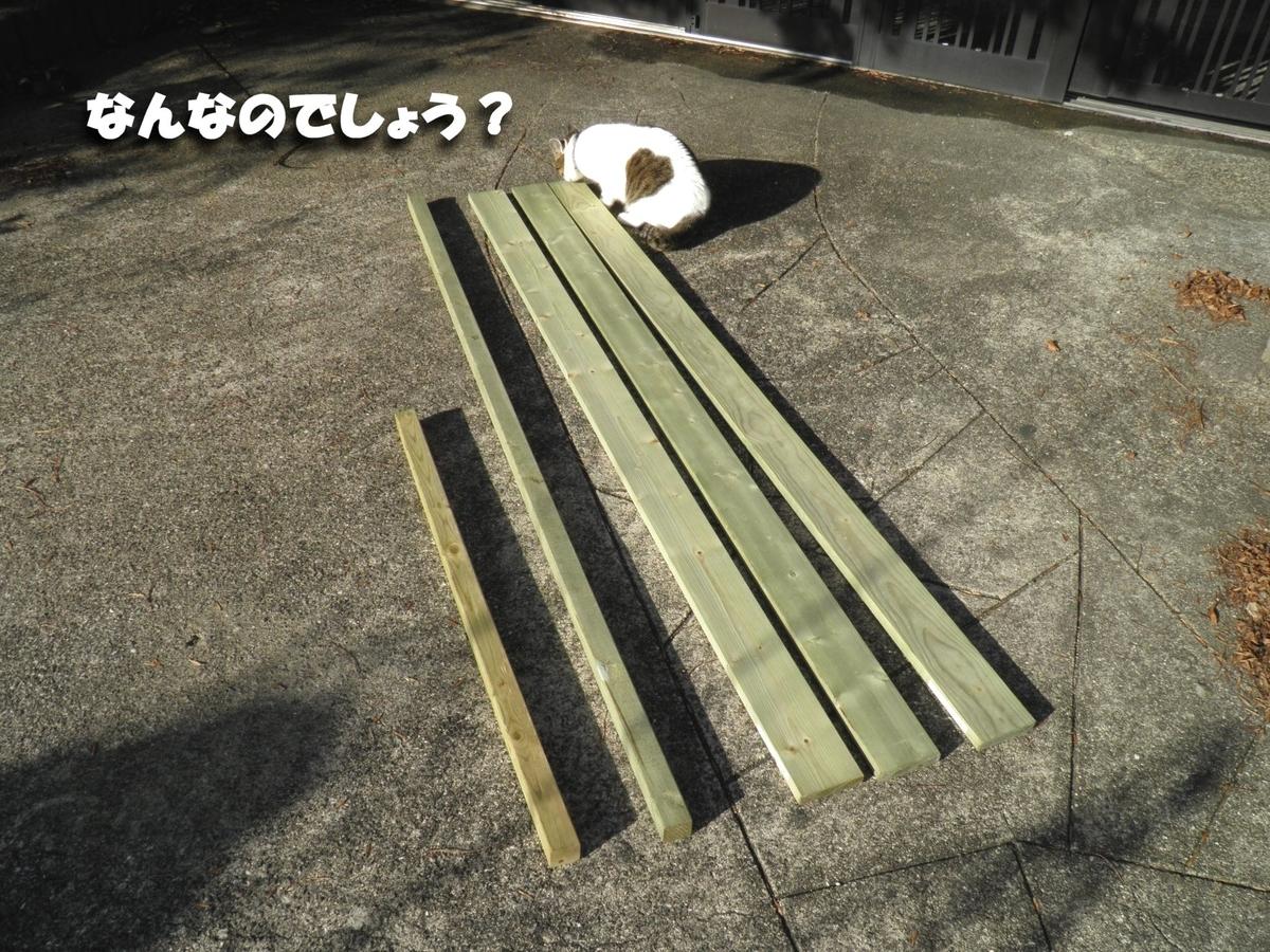 材木をチェックするネコの写真