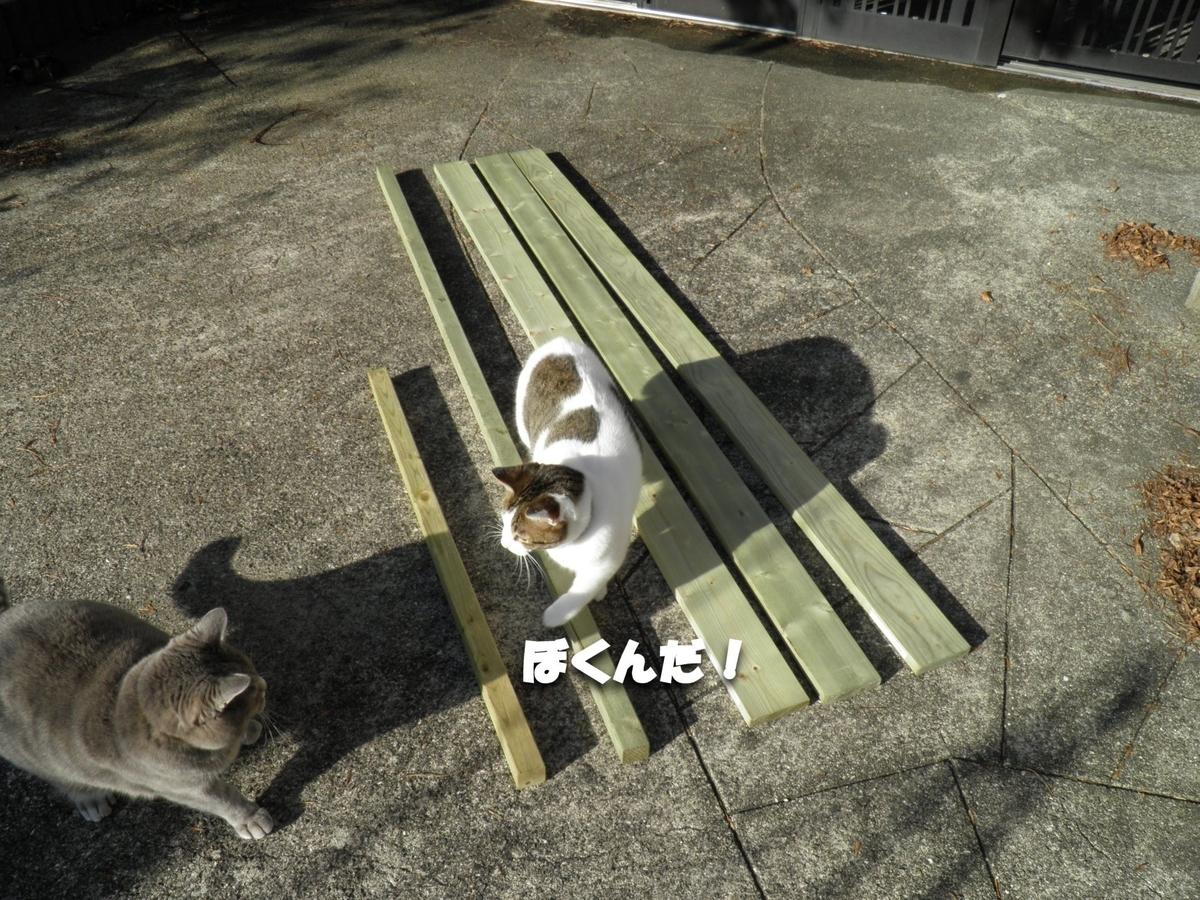 猫 かなたとアンジェロの写真