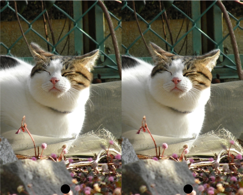 猫のステレオグラム