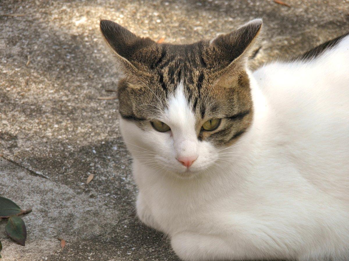 猫かなたの写真
