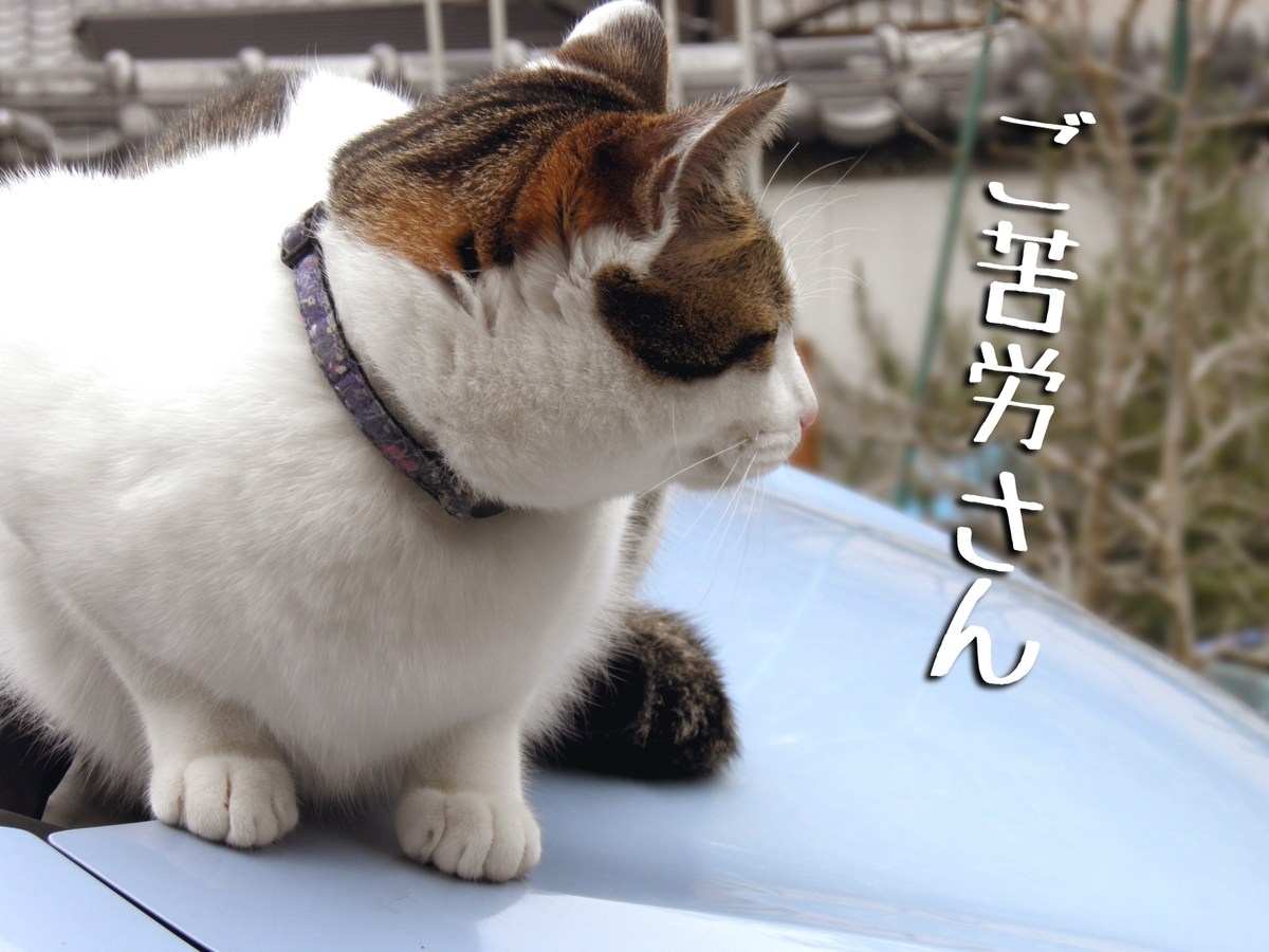 f:id:masuhiro6595:20200304103313j:plain