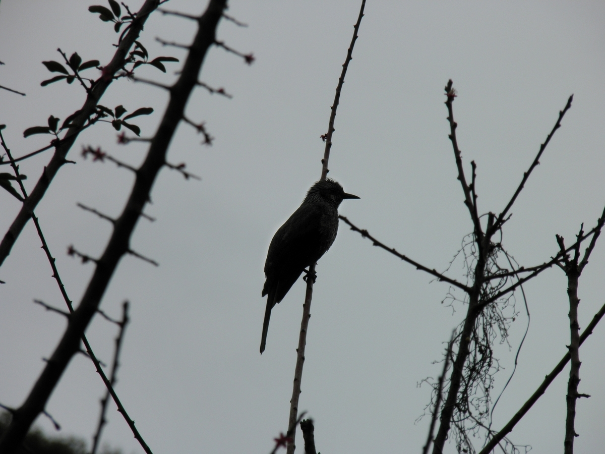 梅の木の小鳥